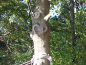 国立市谷保、城山公園のバレンタインツリー